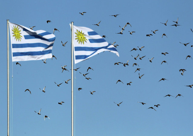 Birds fly over Uruguayan flags in Kimberley, South Africa