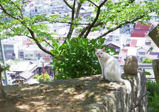 Un gato en la ciudad japonesa de Onomichi
