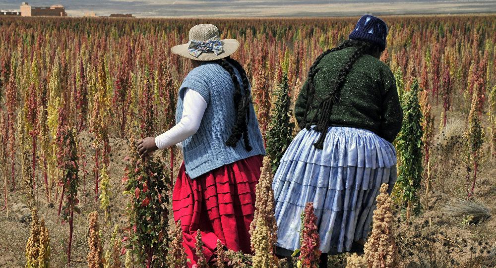 Un campo en Tarmaya, Bolivia (archivo)
