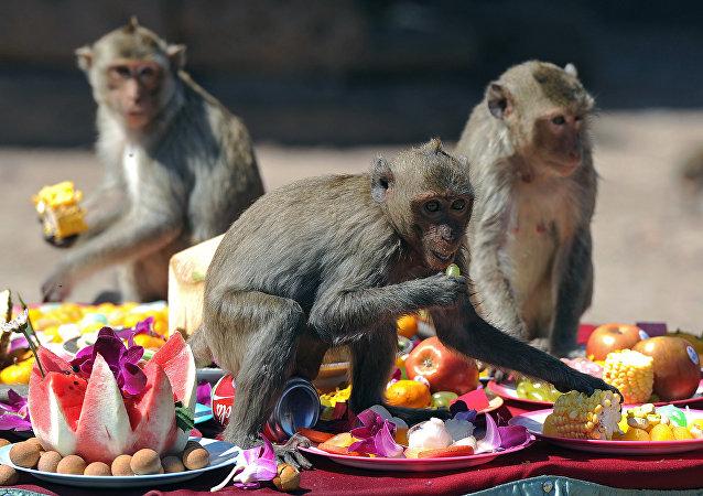 Macacos en Bangkok
