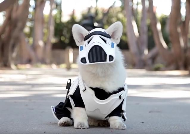 Un 'stormtrooper' de cuatro patas