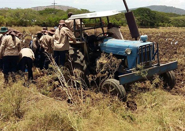 Un grupo de jóvenes reinsertados de las FARC, el ELN y las AUC participan en su capacitación como técnicos en fruticultura en una hacienda del Valle del Cauca, en el suroeste de Colombia, en el marco de un plan de reinserción que apoya el Gobierno, la empresa privada del país y organismos internacionales en el camino hacia la paz.