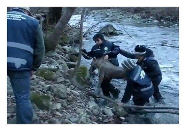 Socorristas salvan a un lobo