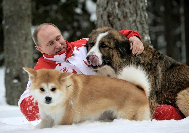 Las mascotas de los líderes mundiales