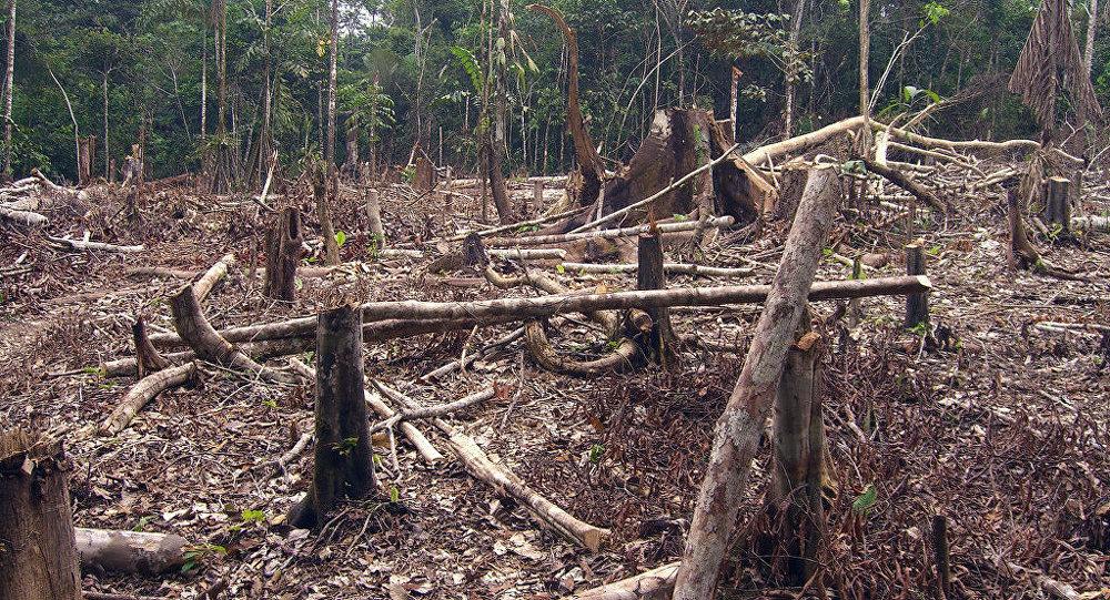 Deforestación (imagen referencial)