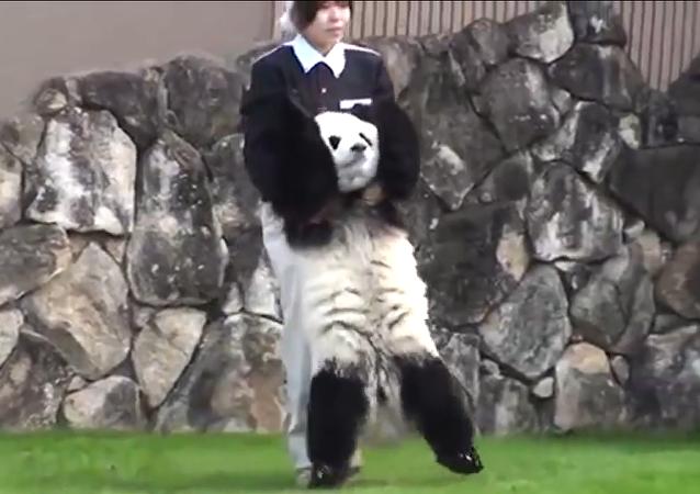 Una panda con carácter
