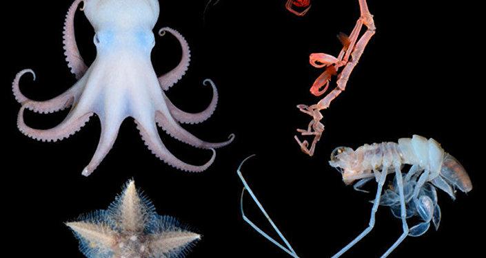 Organismos nuevos encontrados en el Mar de Ojotsk
