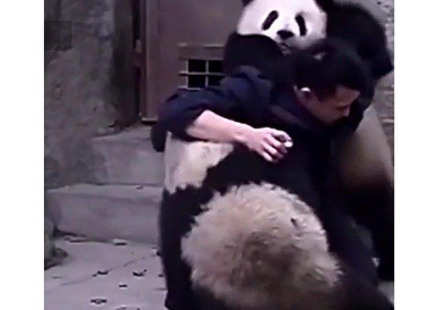 Los pandas también tienen miedo del doctor