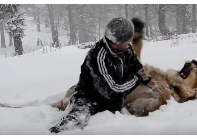 Mientras tanto en Rusia un hombre juega con un león