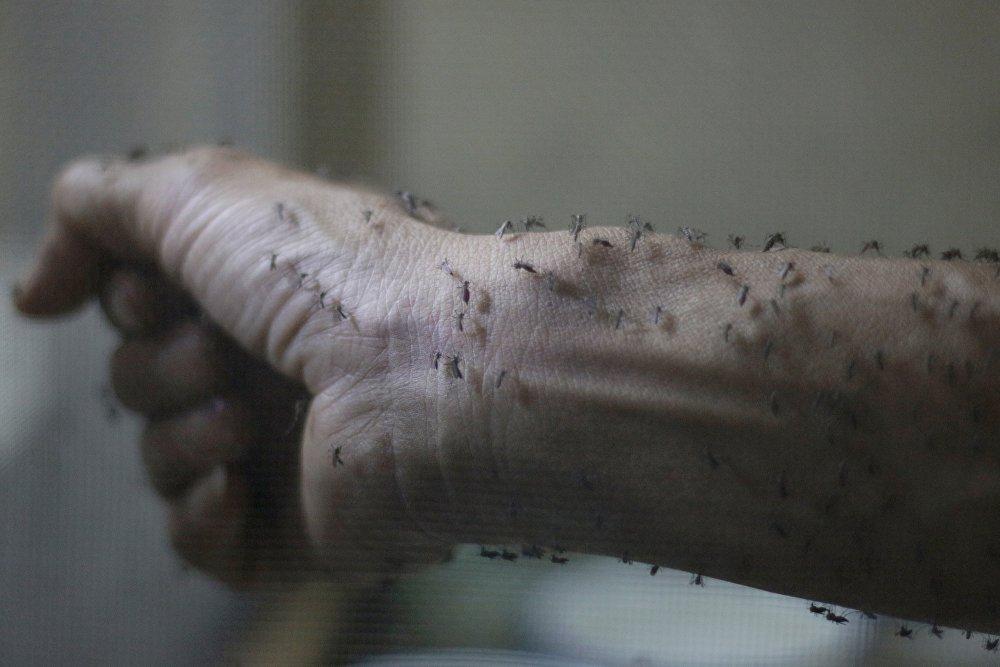 Virus Zika: una nueva amenaza de pandemia