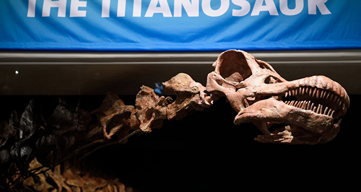 Esqueleto del Titanosaurio argentino en Nueva York