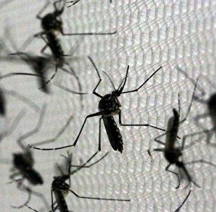 Aedes Aegypti, portadores del virus de zika