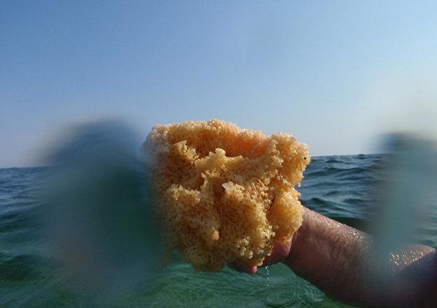 La esponja marina