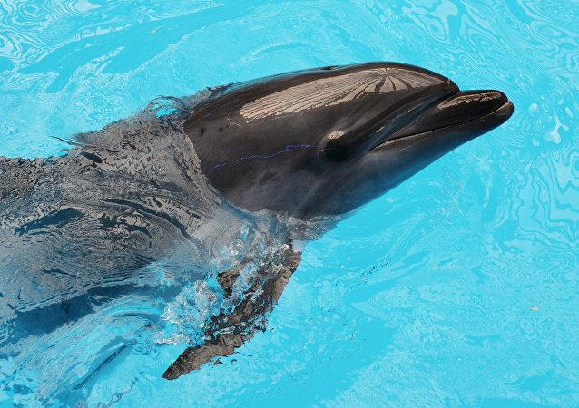 Un delfín (imagen referencial)