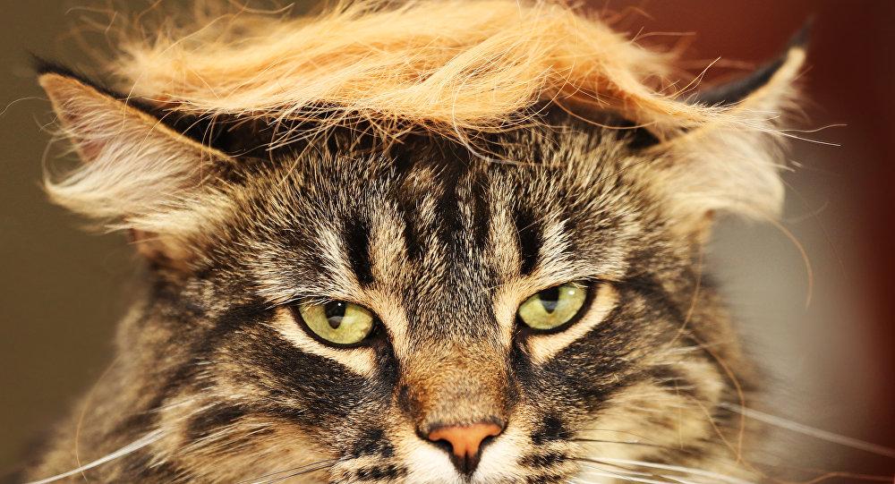 #trumpyourcat
