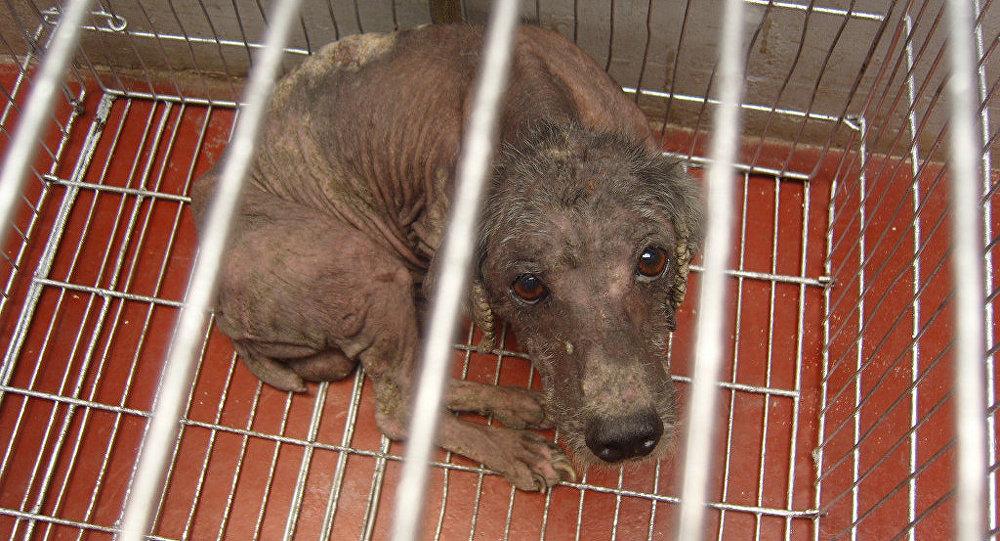 Un perrito enfermo y triste.