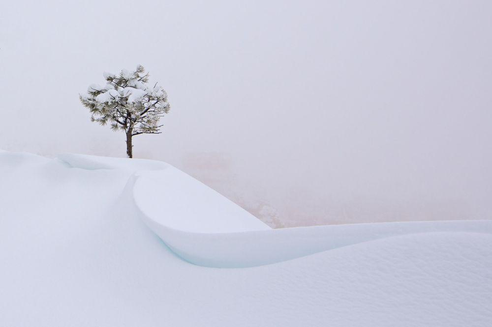 Las obras más vistosas del concurso de fotografía de National Geographic
