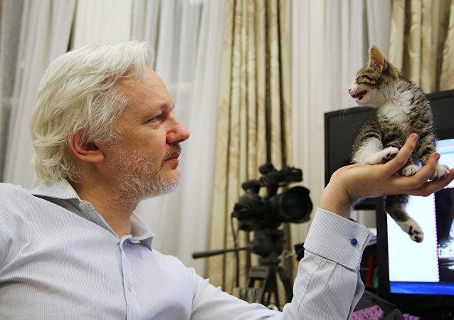 Julian Assange con su gato (archivo)