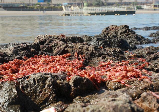 Efecto de marea roja en Chile