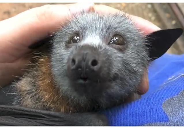 ¿Cómo entrenar a tu murciélago?