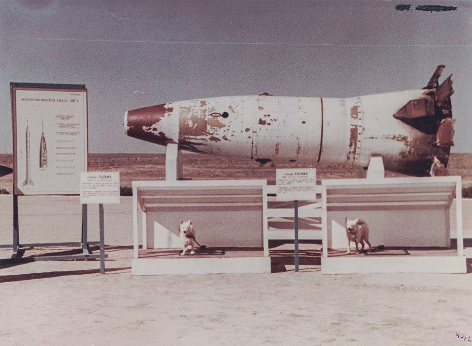 La cabeza del misil R-2, con los perros Pelirroja y Damisela (Ryzhaya y Damka, en ruso), tras el exitoso aterrizaje