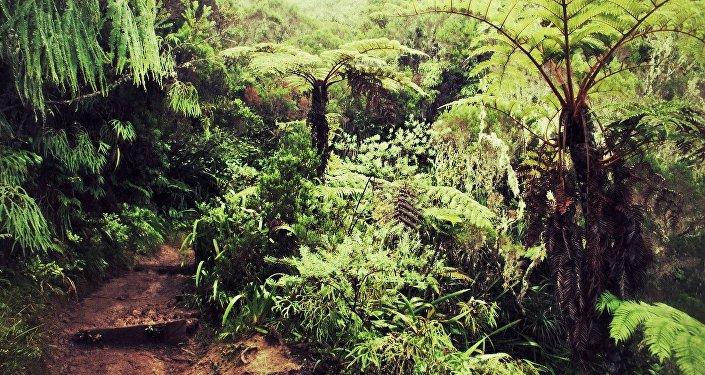 Un bosque africano