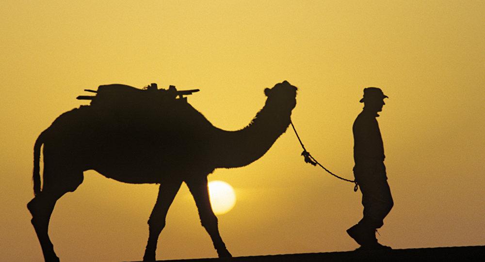 Un camello