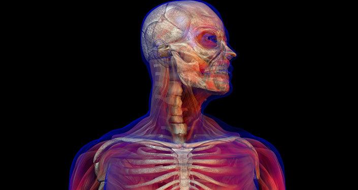 Cuerpo humano (ilustración)