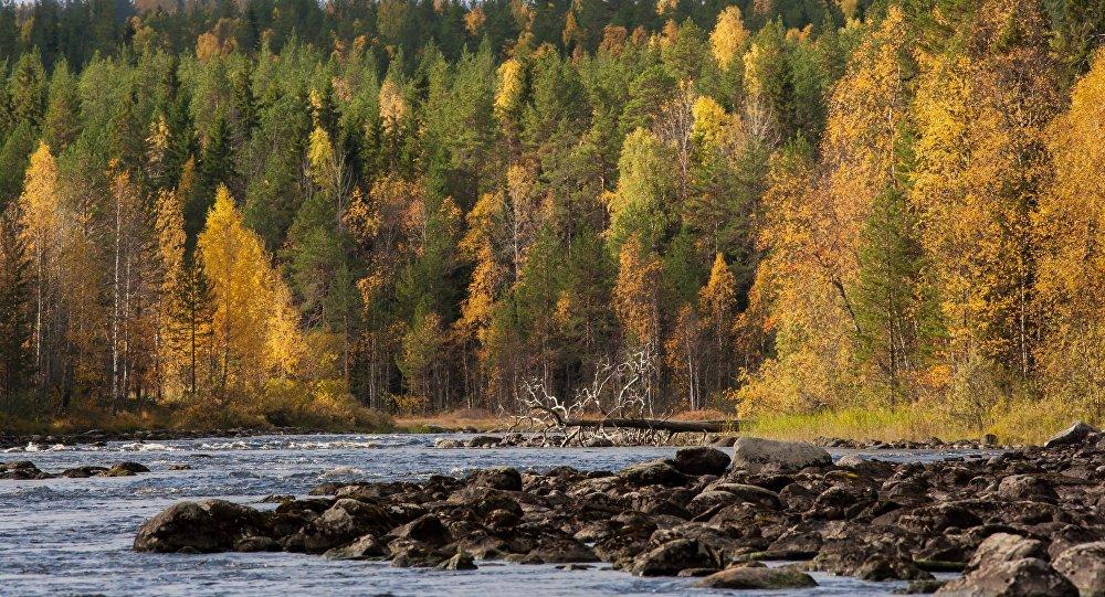Bosques en Rusia