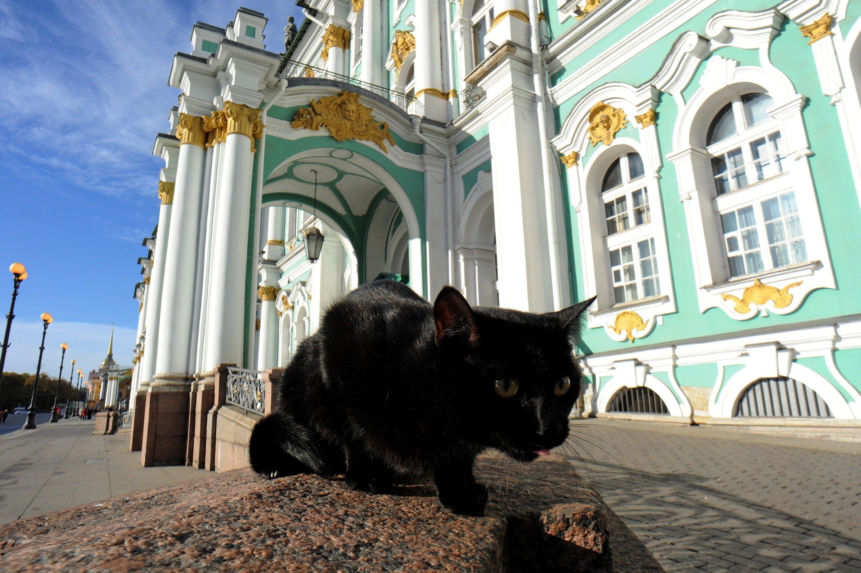 Un empleado felino del Hermitage