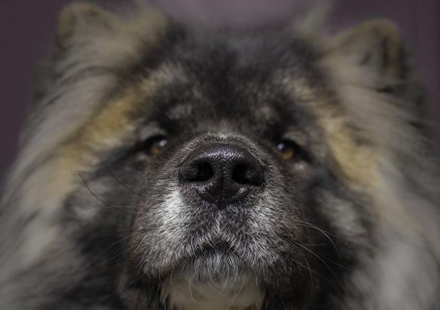 Un perro esperando a su dueño