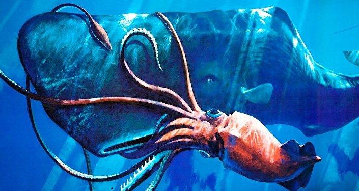 FOTOS: Hallan un calamar gigante en Nueva Zelanda