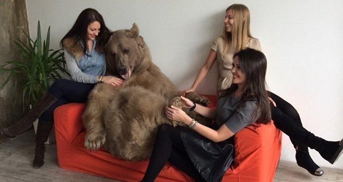 El oso Stepán en una sesión de fotos