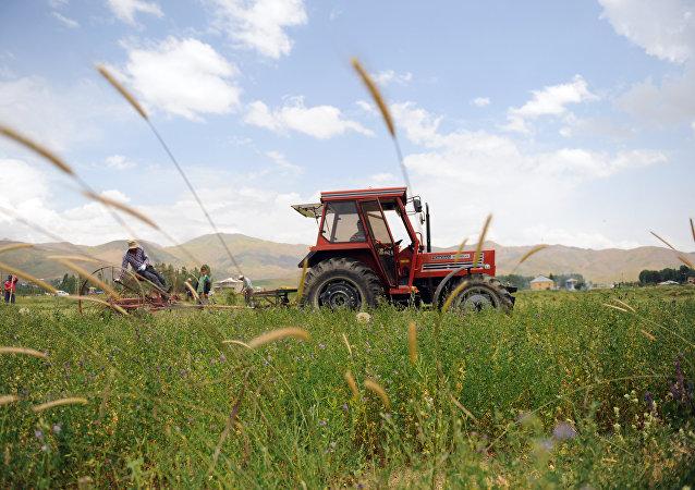 Cultivo en Turquía