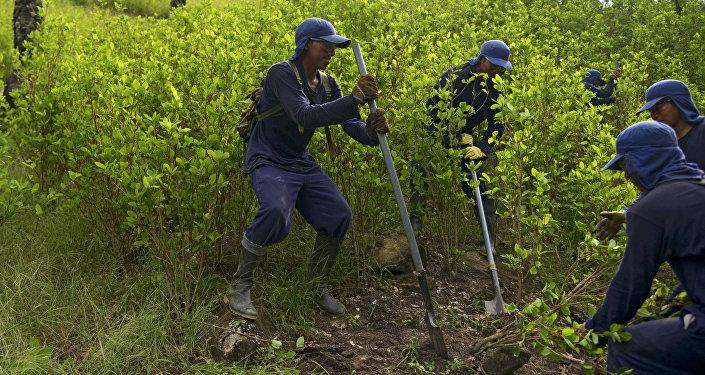 Erradicación de cultivos de coca en Colombia por parte de campesinos