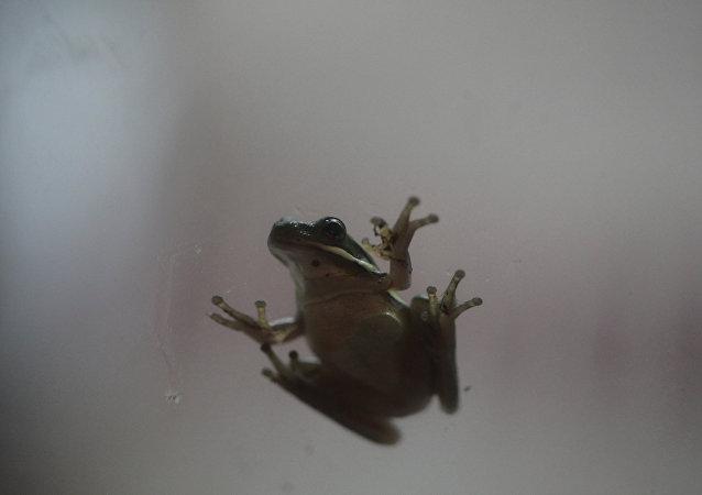 Una rana (archivo)