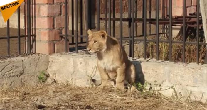Masha la leona