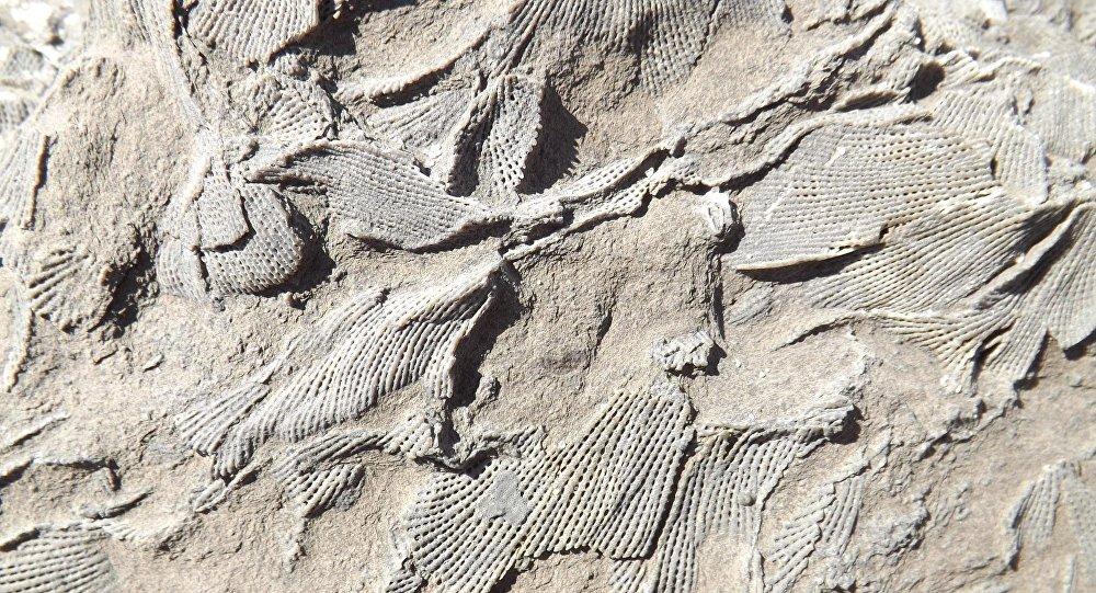 Restos fósiles