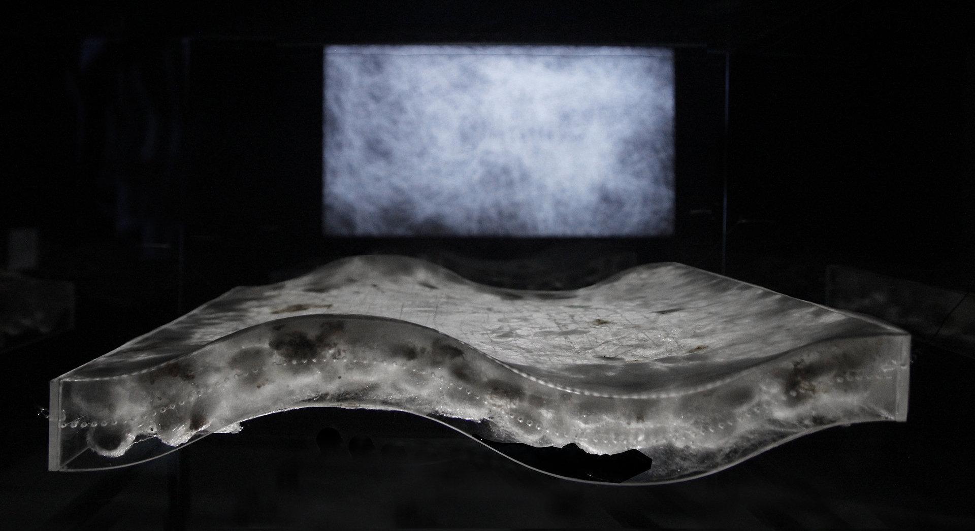 Escultura biológica y audiovisualización Wave (versión II)
