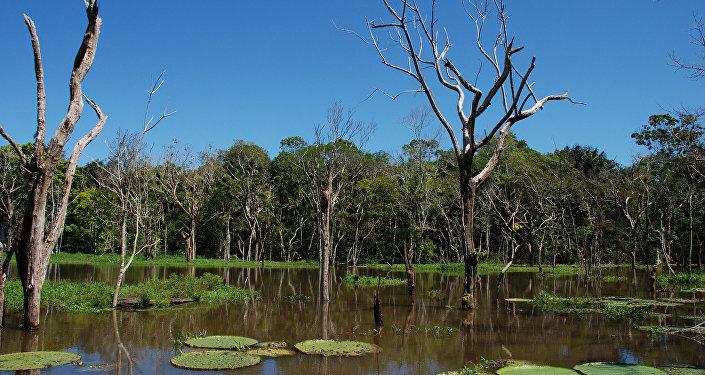 Región del Amazonas en Brasil