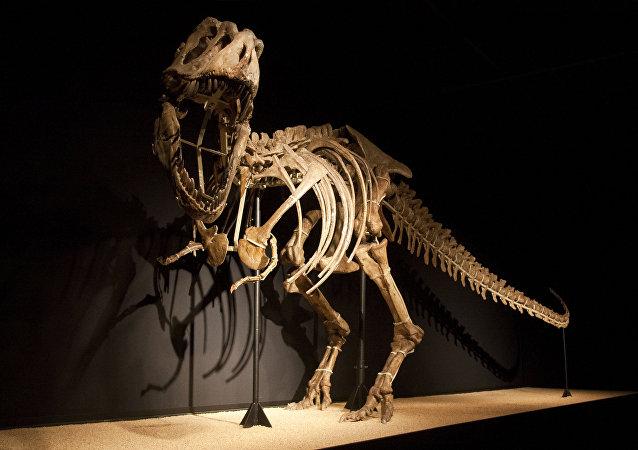Esqueleto del dinosaurio (imagen referencial)