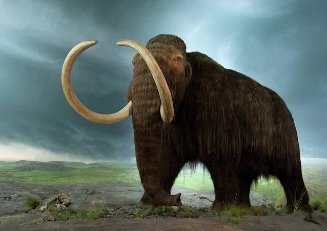 Un mamut