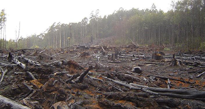 La FAO culpa a Suramérica de la mayor deforestación a nivel mundial