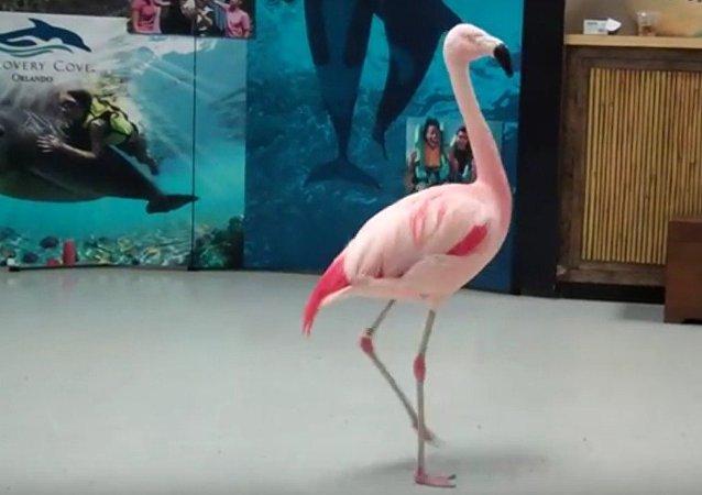 Pinky, un flamenco rosado