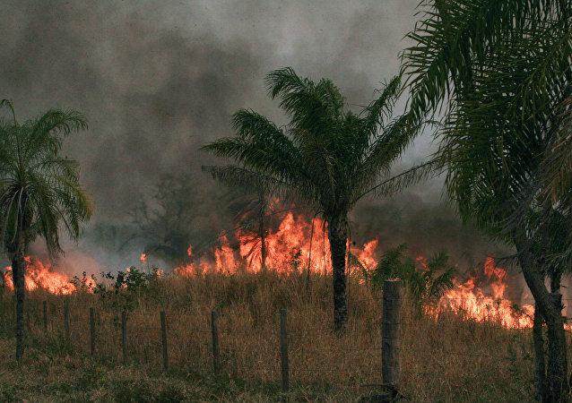 Incendios forestrales en Bolivia