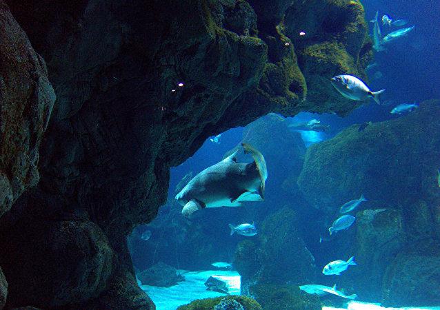 Los peces en el acuario