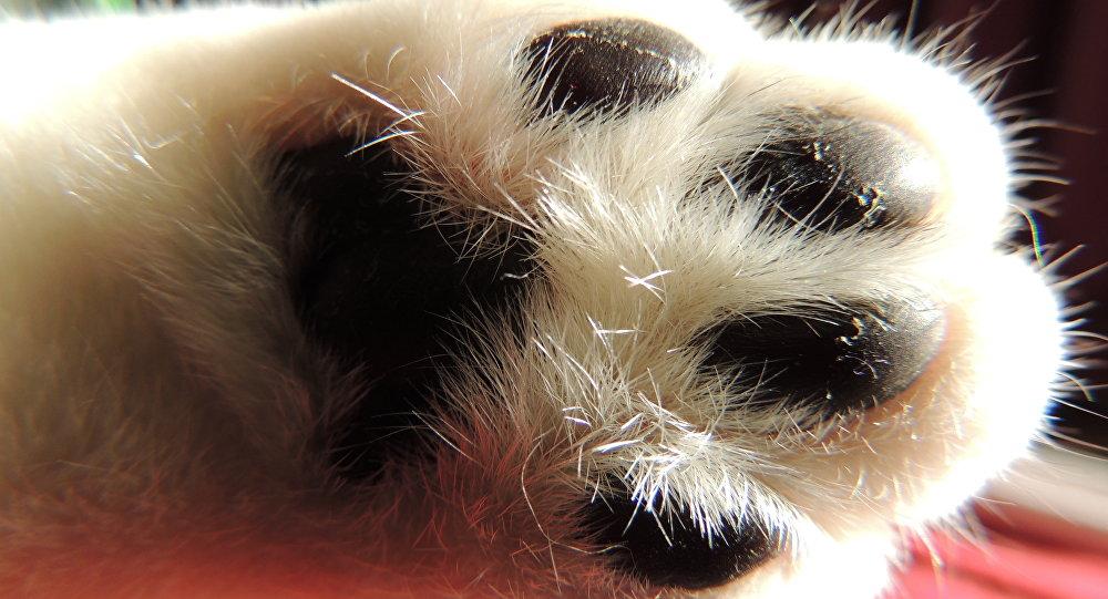 La pata de un gato