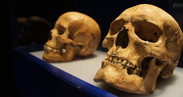 Cráneos en el Museo Histórico de Estocolmo