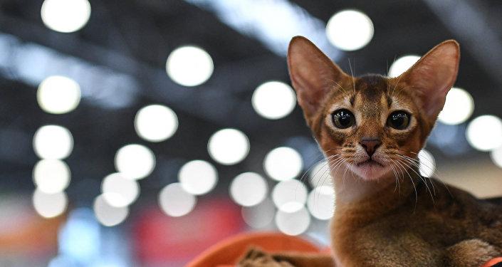 Un gato (Archivo)