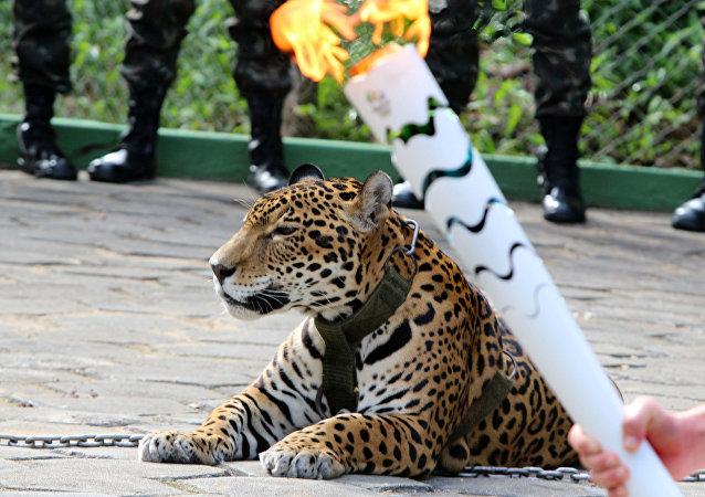 Jaguar Juma, que fue abatido a tiros después de participar en el relevo de la antorcha olímpica